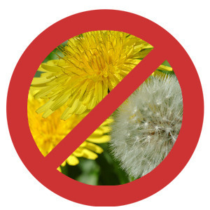 do not use weed killer